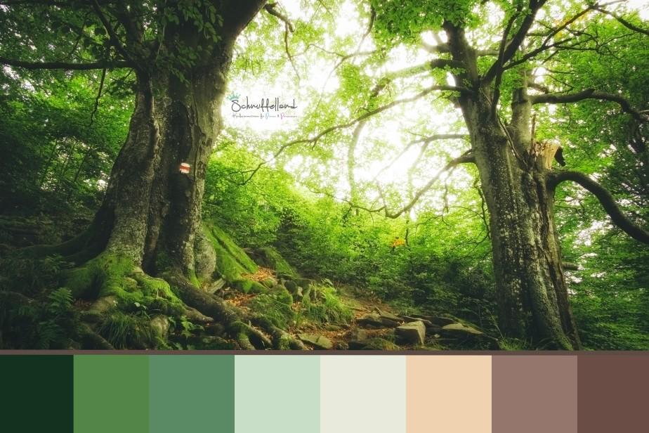 """Themenzimmer """"Wald"""""""